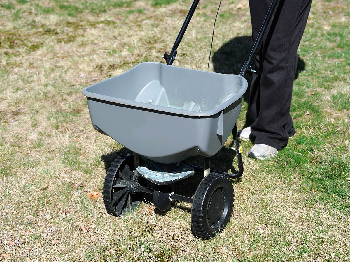 Fertilize the lawn in spring
