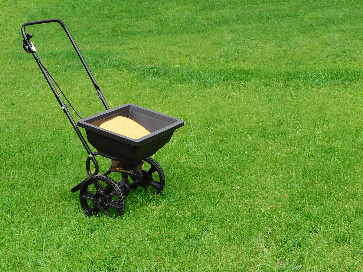Fertilize the lawn in summer