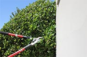Trim shrubs away from siding  Photo